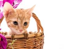 滑稽的查出的小猫空白的一点 免版税库存图片