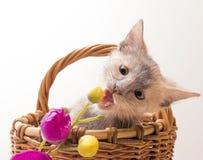 滑稽的查出的小猫空白的一点 免版税库存照片