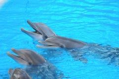 滑稽的海豚 免版税库存图片
