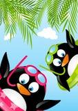 滑稽的游泳企鹅 库存图片