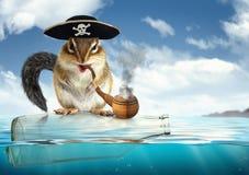 滑稽的漂移的动物海盗,与阻饶议事的议员帽子的花栗鼠 免版税库存图片