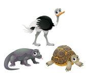 滑稽的澳大利亚动物、驼鸟、乌龟和科莫多巨蜥 库存图片