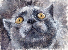 绘--滑稽的灰色猫 库存照片