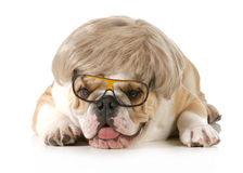 滑稽的狗 库存图片