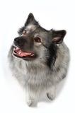 滑稽的狗 免版税库存照片