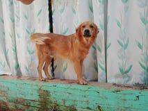 滑稽的狗 免版税图库摄影
