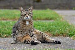 滑稽的猫在庭院里 免版税库存图片