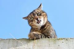 滑稽的猫 库存照片