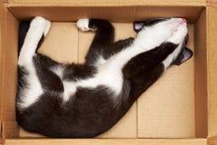 滑稽的猫 图库摄影