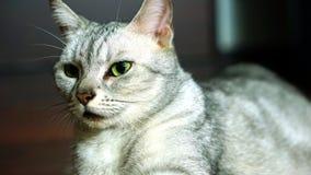 滑稽的猫 免版税图库摄影
