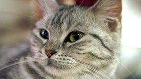滑稽的猫 免版税库存图片