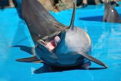 滑稽的笑的海豚 库存图片
