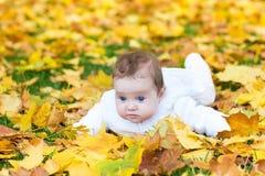 滑稽的逗人喜爱的女婴在黄色叶子的秋天公园 免版税库存照片