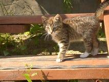 滑稽的镶边小猫 免版税图库摄影