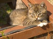 滑稽的镶边小猫 免版税库存图片