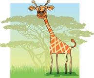 滑稽的长颈鹿在非洲 图库摄影