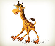 滑稽的长颈鹿 图库摄影