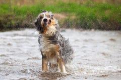 滑稽的震动的狗 免版税库存图片