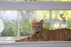 滑稽的面孔小猫 库存照片