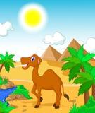 滑稽的骆驼动画片有沙漠风景背景 库存例证