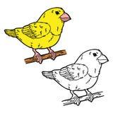 滑稽的鸟 库存照片