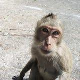 滑稽的猴子 免版税库存照片