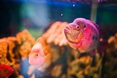 滑稽的水族馆鱼 库存图片