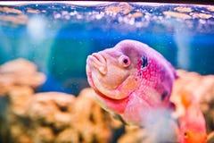 滑稽的水族馆鱼 免版税库存图片