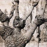 滑稽的结构树 库存图片