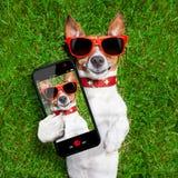滑稽的selfie狗 免版税库存照片