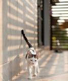 滑稽逗人喜爱的猫 免版税图库摄影