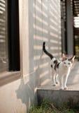 滑稽逗人喜爱的猫 库存照片