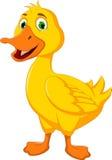 滑稽鸭子动画片摆在 库存照片