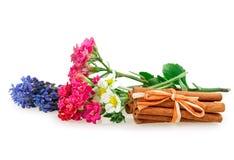 穆斯卡里花草莓,苹果开花, Kalanchoe 库存图片