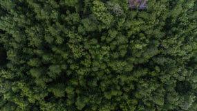 空中三叶橡胶树,橡胶园 图库摄影
