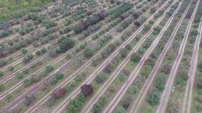 空中全景-秋天苹果树 股票视频