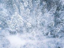 空中冬天森林视图 寄生虫风景,飞行上面 与雪,美好的墙纸背景的白色树 高现代photogra 库存图片
