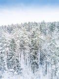 空中冬天森林视图 寄生虫风景,飞行上面 与雪,美好的墙纸背景的白色树 高现代photogra 图库摄影