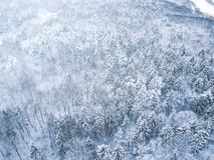 空中冬天森林视图 寄生虫风景,飞行上面 与雪,美好的墙纸背景的白色树 高现代photogra 库存照片