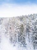 空中冬天森林视图 寄生虫风景,飞行上面 与雪,美好的墙纸背景的白色树 高photogra 库存图片