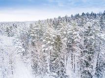 空中冬天森林视图 寄生虫风景 白色树有雪背景 高现代photogra 库存照片