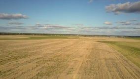 空中在天空蔚蓝下的行动不尽的黄色成熟麦田 影视素材