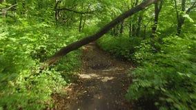 空中在的降低下面树树在一个森林里在夏天 空中英尺长度 影视素材