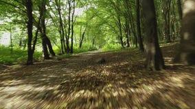 空中在的降低下面树树在一个森林里在夏天 空中英尺长度 股票视频