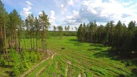 空中在的降低下面树树在一个森林里在夏天 影视素材