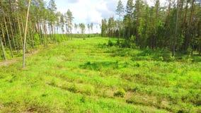 空中在的降低下面树树在一个森林里在夏天 股票视频