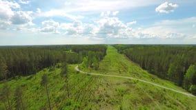 空中在的降低下面树树在一个森林里在夏天 股票录像