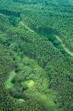 空中大玉树森林海岛雨射击 免版税库存图片