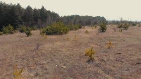 空中寄生虫英尺长度视图 在秋天小山的飞行后面与森林柔光 惊人的木风景 黄色退了色 股票录像