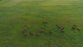 空中寄生虫英尺长度, runing在绿色领域的马 股票录像